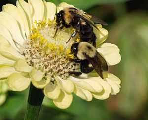 Bees sharing