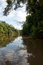 Amazon tributary